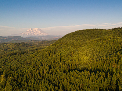 aerial view of forest with Mt. Rainier in background
